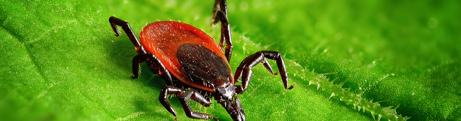 tick control services in Socorro